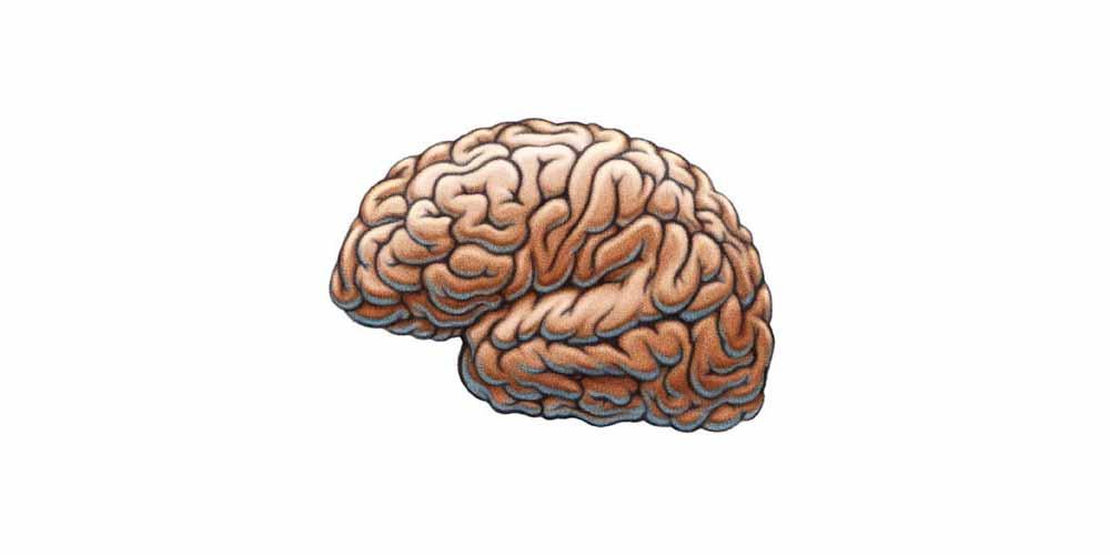 Canada Segnalati casi di una strana malattia al cervello