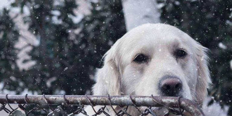 Covid-19: Cani e gatti contribuiscono a diffondere la variante britannica