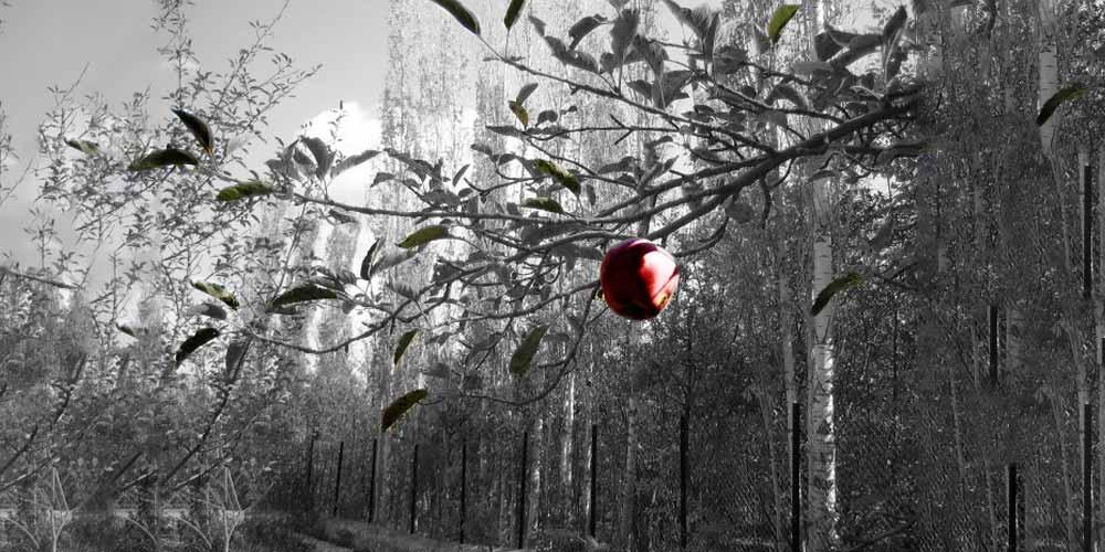 Il frutto proibito non era una mela