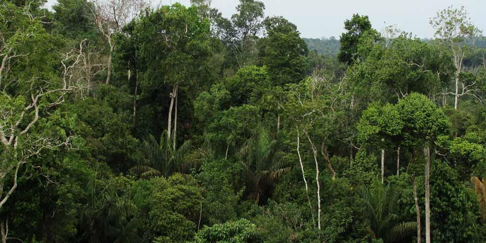 La foresta pluviale nata da asteroide che ha ucciso i dinosaur