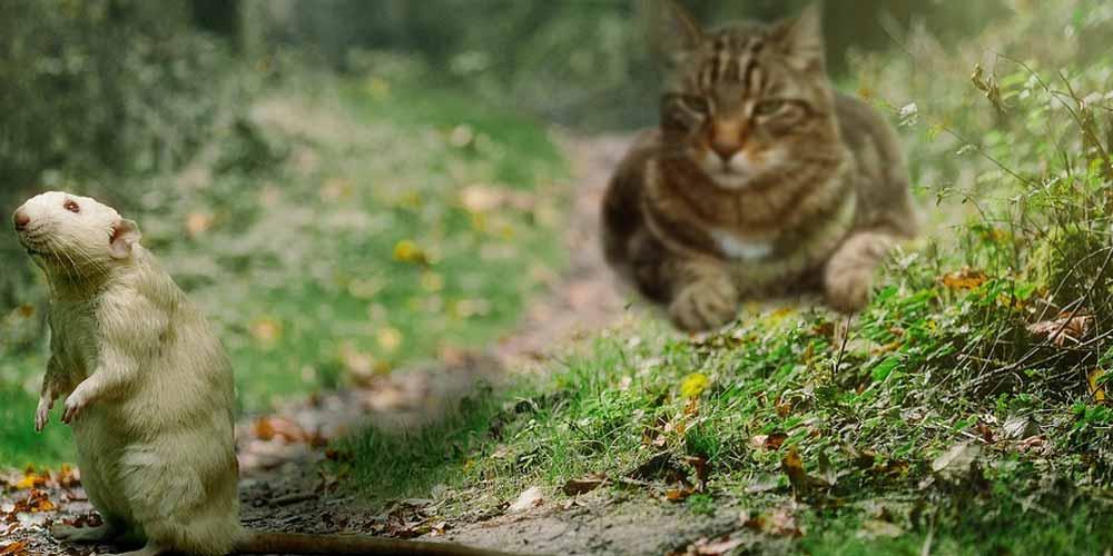 troppi topi la soluzione 1000 gatti selvatici