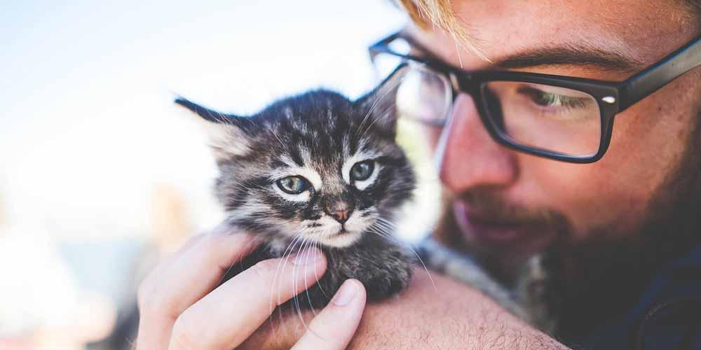 I gatti e i loro proprietari scientificamente hanno 5 tipi di relazioni