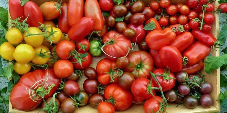 Quando non fanno bene i pomodori?